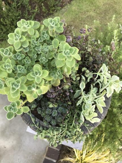 多肉植物2
