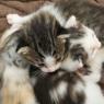 猫の赤ちゃん